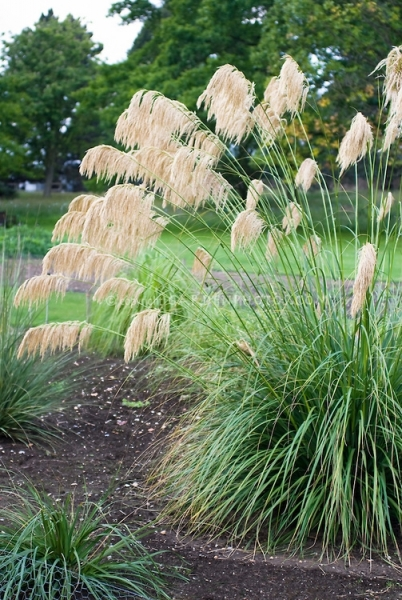 Image Result For How To Start A Garden Where Gris Currently